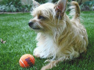 Pet Turf Applications