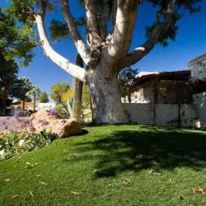 Large tree in background of artificial lawn surface with nearby plants and boulders