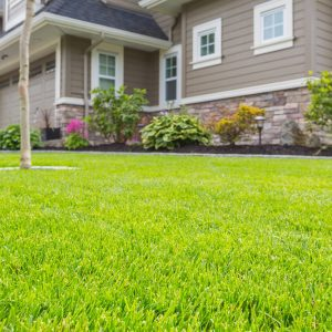 Custom synthetic grass landscape design at Kansas City home